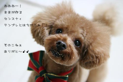 139_20081127183702.jpg