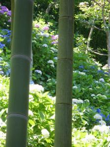 長谷寺・竹と紫陽花