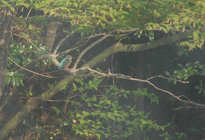 2008-04-25-0045-.jpg