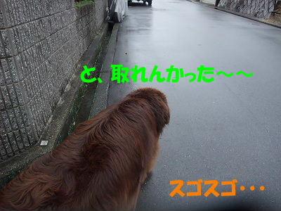 2009_1111torenai0016.jpg