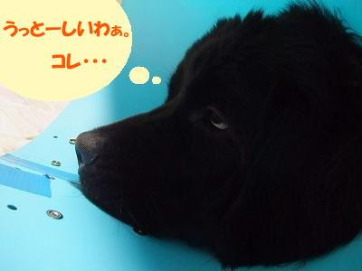 2009_1119aquasyujutugo0013.jpg