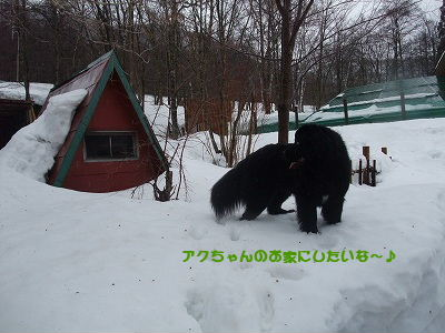 2010_0227takayama20049.jpg