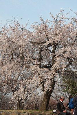 2010_0322turumiryokuti0106.jpg