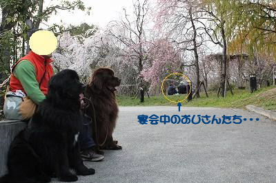 2010_0322turumiryokuti0132.jpg
