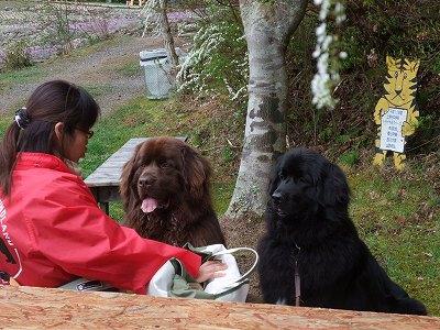 2010_0421sibazakura0014.jpg
