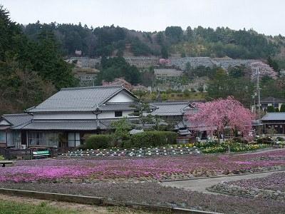 2010_0421sibazakura0023.jpg