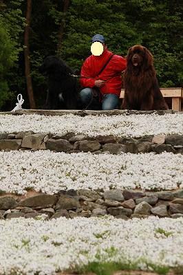 2010_0512sibasakura20211a.jpg