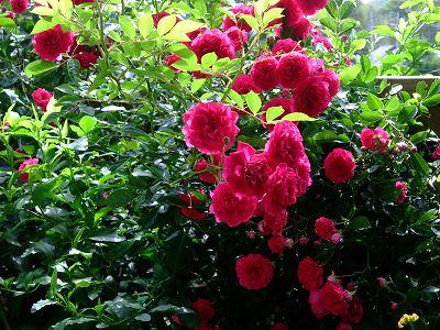 2010_0526biwako40012.jpg