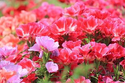 2010_0610biwako40292.jpg