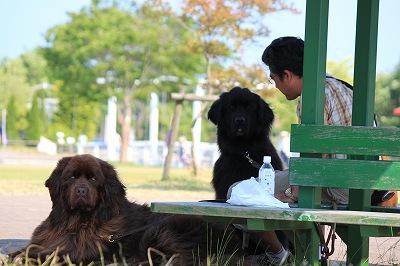 2010_0610biwako40308.jpg
