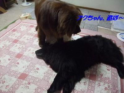 2010_0619kedamatori0010.jpg