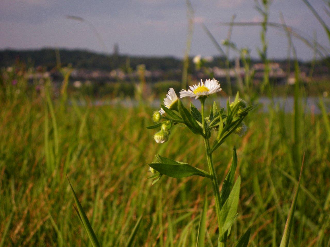FloralColors26.jpg