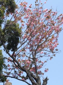 sumaurapark2_convert_20120423174504.jpg