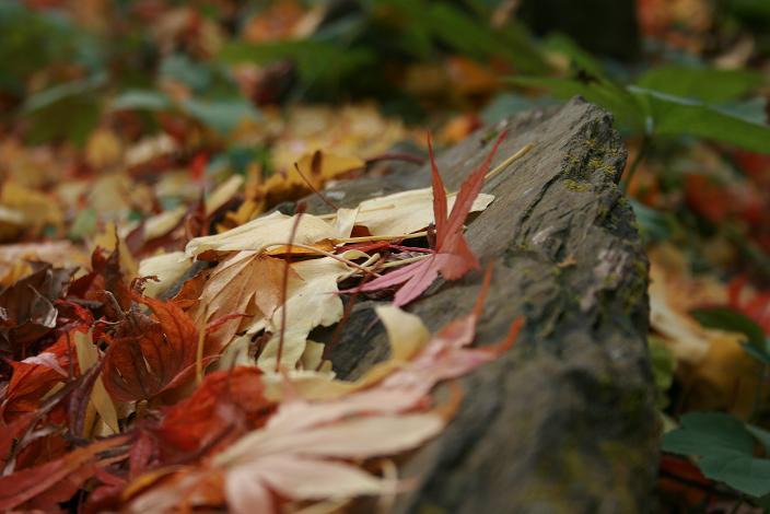 ばいばい秋