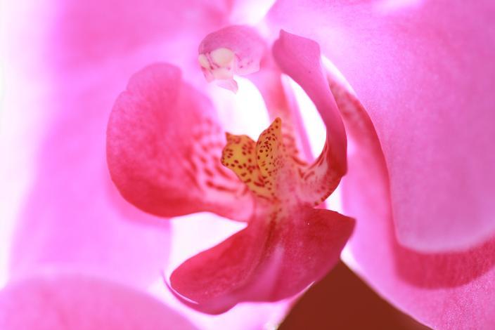 花の中のどくろ