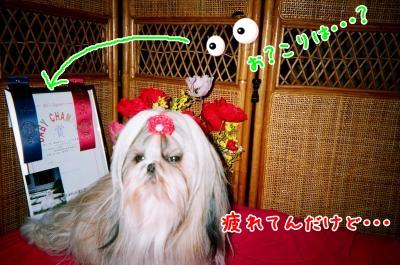 026_10_convert_20090118193403.jpg