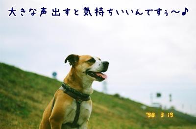 035_35A_convert_20090221230422.jpg