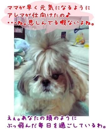 05-09-04_19-22.jpg