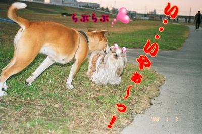 156_30A_convert_20090211153119.jpg