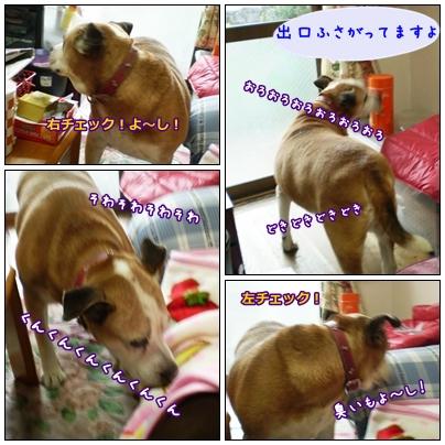 2008-11-24-001.jpg
