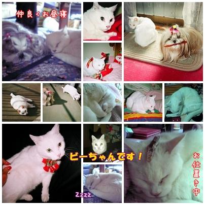 2008-11-25-002.jpg