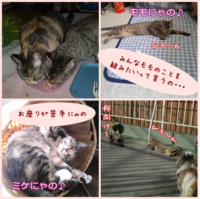 2008-11-25-003.jpg