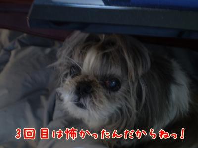 2008_1128_101329-PB280198_convert_20090131231955.jpg