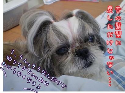 2008_1204_095700-PC040256_convert_20081204170404.jpg