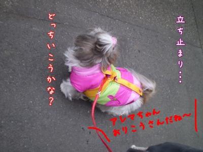 2008_1213_081443-PC130085_convert_20081213155839.jpg