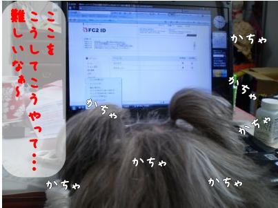 2008_1216_101852-PC160144_convert_20081216124519.jpg