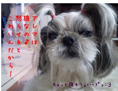 2008_1219_100939-PC190205_convert_20081219201833.jpg
