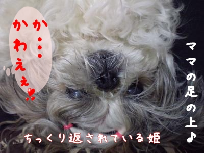 2008_1219_200916-PC190212_convert_20081219202000.jpg