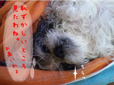 2008_1221_124045-PC210250_convert_20081221161017.jpg