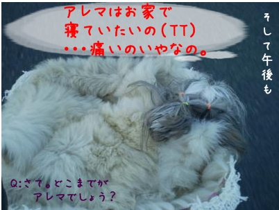 2008_1225_160603-PC250029_convert_20081225173915.jpg