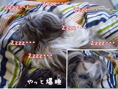 2008_1227_124120-PC270071_convert_20081227130506.jpg