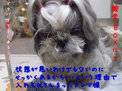 2008_1227_195327-PC270077_convert_20081228120515.jpg