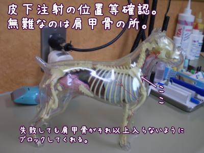 2008_1229_094248-PC290089_convert_20081229105605.jpg