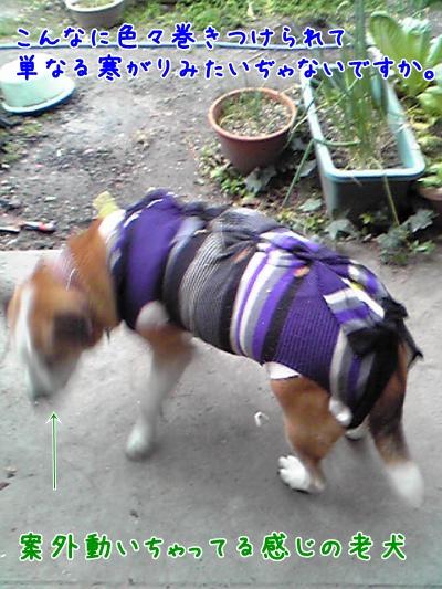 2009-02-13-03_convert_20090214185034.jpg