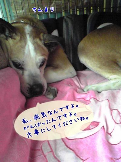 2009-02-13-04_convert_20090214185103.jpg