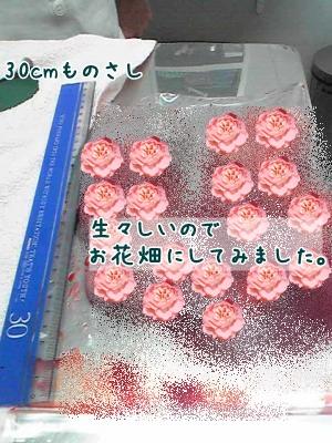 2009-02-13-05_convert_20090214185124.jpg