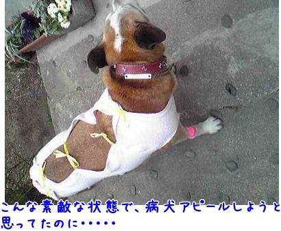 2009-02-13-06_convert_20090214185008.jpg