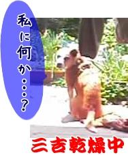 03-05-12_乾燥中 (2)