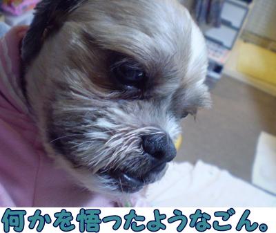20090328161003.jpg