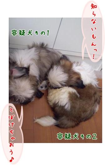 20090331112750.jpg