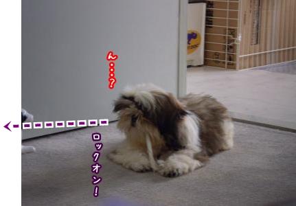 20090519212452.jpg