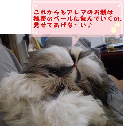 20090611184316.jpg