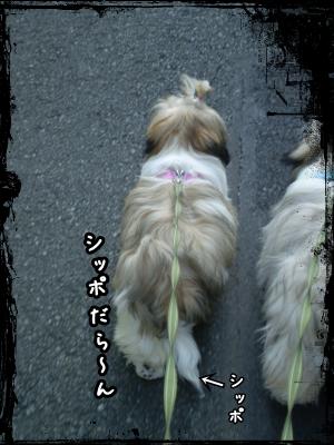 20090627200418.jpg