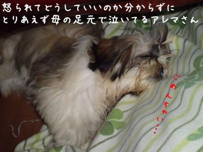20090629184809.jpg