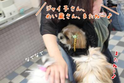 20090917200212.jpg
