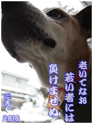 2010-01-01-07.jpg